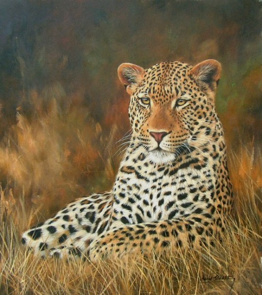 The Leopard Paintings of British Wildlife Artist David Stribbling