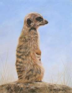 The Wildlife Art of David Stribbling
