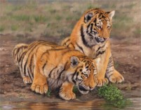tiger cubs, original wildlife art